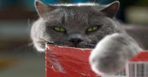 دراسة صادمة.. قطتك قد تلتهم جسدك بعد موتك