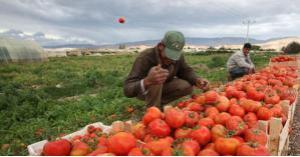 خطة لاقراض 9 آلاف مزارع بقيمة 49 مليون دينار