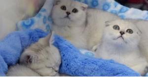 كوب قهوة ينقذ 3 قطط.. فيديو