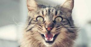 قطة شريرة تحبس امرأة يومين .. وفرق الإنقاذ تتدخل