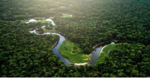 انقاذ امرأة وأطفالها بعد فقدانهم 34 يوما الأمازون