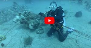 بالفيديو: الملك وولي العهد يغوصان في خليج العقبة
