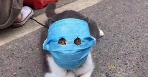 خوفا من كورونا .. اقنعة طبية لقطط الصين