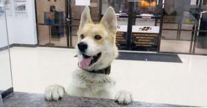 كلب فقد أصحابه فتوجه إلى مركز للشرطة