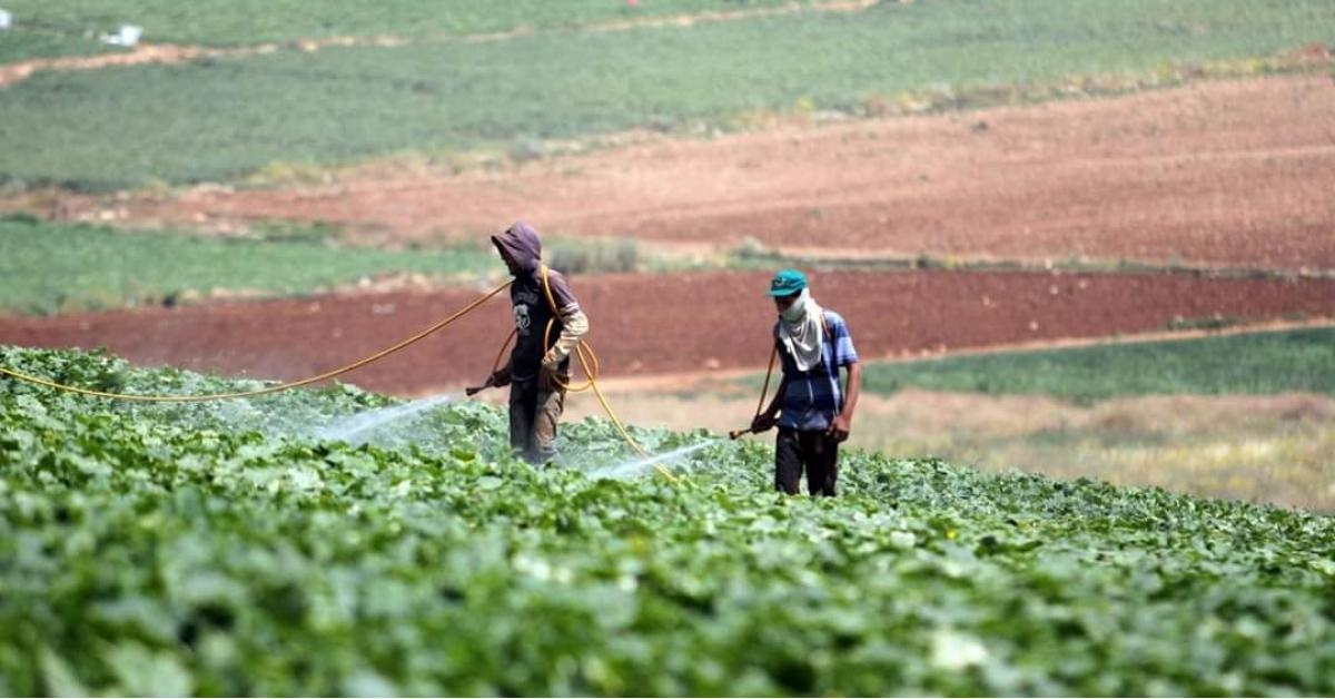 السماح للمزارعين بالبيع مباشرة للمواطنين وتجار التجزئة