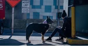 هل تنجح الكلاب في حل لغز كورونا؟