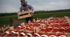 اتفاق على توريد منتجات المزارعين للأسواق
