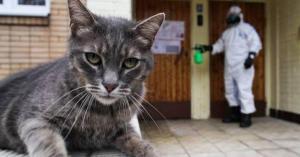 15% من القطط في ووهان مصابة