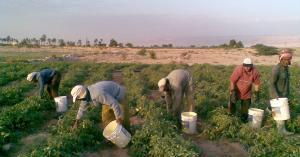 الحكومة تعلن عن آلية منح التصاريح للمزارعين