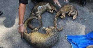 أسواق الحيوانات الصينية تفتح أبوابها