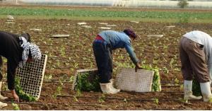 العمل.. السماح للعمالة الوافدة بالمغادرة لن يؤثر على القطاع الزراعي