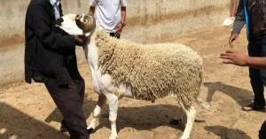 تعرف على أول دولة عربية تدرس إلغاء احتفالات عيد الأضحى