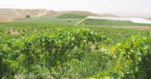 الزراعة: البدء بتنفيذ التوجهات الملكية