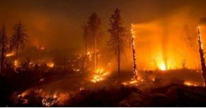 الأمازون تشهد أسوأ موجة حرائق منذ 13 عاما