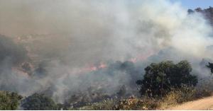 الدفاع المدني يخمد حريق أعشاب وأشجار في الزرقاء