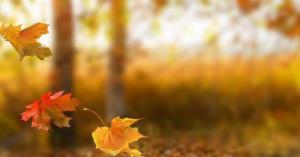 الأرصاد الجوية: الخريف فصل التقلبات السريعة والحادة يبدأ الثلاثاء
