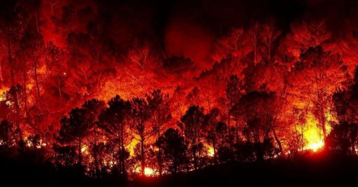 النيران تلتهم مناطق بسوريا ولبنان في أكبر سلسلة حرائق تشهدها المنطقة