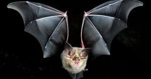 اكتشاف فيروس مطابق لكورونا.. والخفاش بدائرة الاتهام