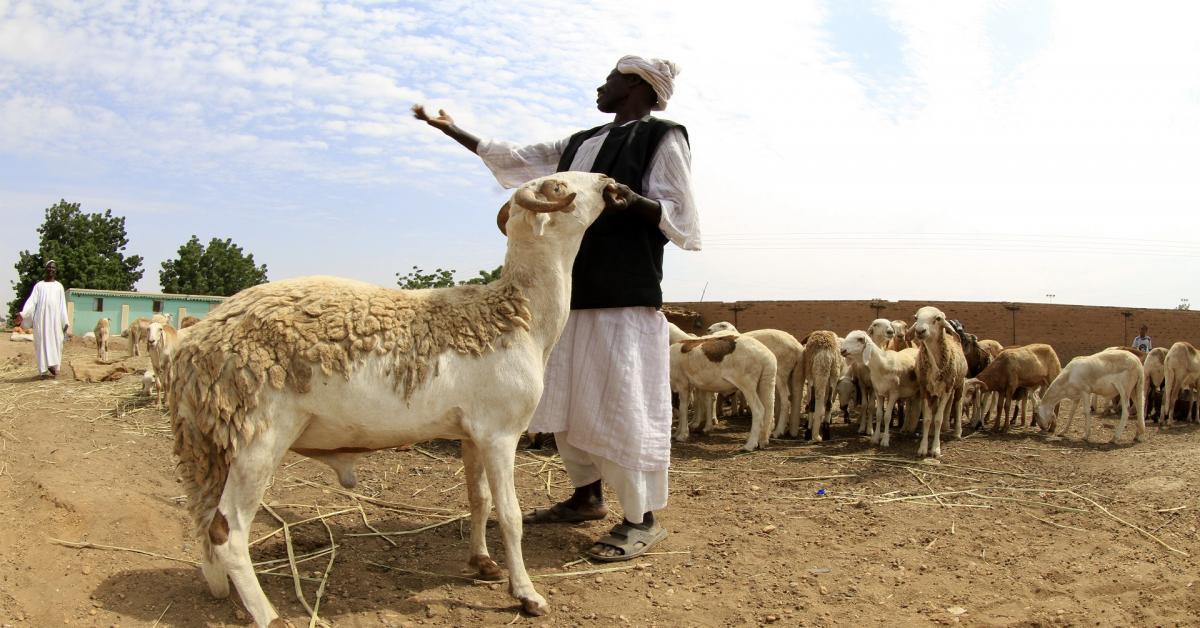 الحكومة تنفي إهداء السودان لحوماً للشعب الأردني