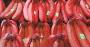 """""""الموز الأحمر""""أقل انتشارا وأكثر فائدة"""
