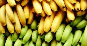أي موز أكثر فائدة- الأصفر أم الأخضر؟