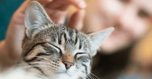 لماذا تختفي القطط يوم عيد الأضحى وأين تذهب بهذا اليوم؟