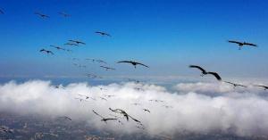 كيف تعبر الطيور المهاجرة المحيطات؟