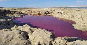 الكشف عن سبب تلون مياه البحر الميت بالاحمر
