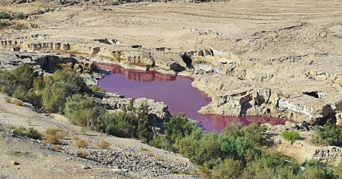 محاسنة: الاقتراب من المياه الحمراء بالبحر الميت خطر جداً