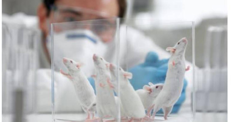 ابتكر علماء في بريطانيا لأول مرة هيكلا يشبه جنين الفأر باستخدام ركائز ثلاثية الأبعاد ونوعين من الخلايا الجذعية.