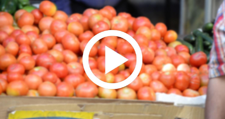 إرتفاع اسعار البندورة في الاسواق بسبب التغيرات المناخية