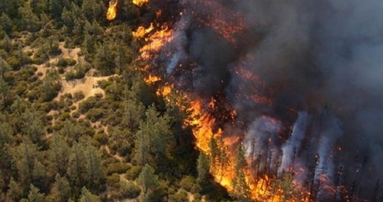 اجراءات احترازية للحد من تكرار حرائق الغابات في مختلف مناطق المحافظة وخصوصا التي تشهد كثافة حرجية