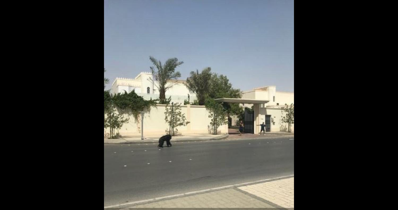هربت غوريلا من قفصها في العاصمة السعودية الرياض، أمس الجمعة، وجابت شوارعها مثيرة الرعب في نفوس المواطنين