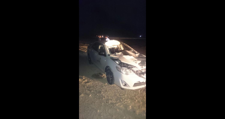 إصابتان إثر اصطدام جمل بمركبة سعودية على الصحراوي